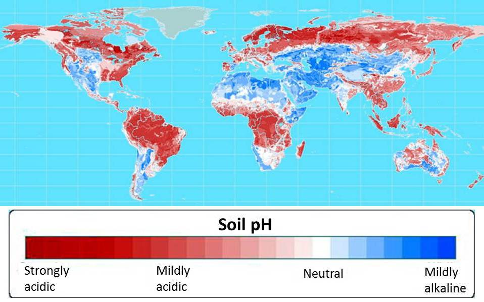 60 percent of the world's potential crop-growing land is highly acidic. Map courtesy of Leon Kochian.