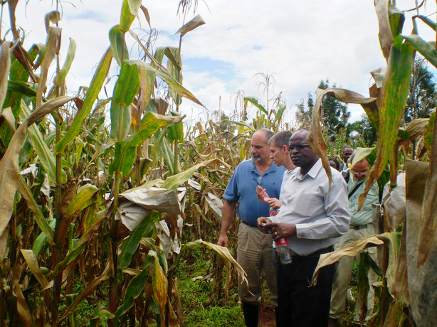 Left to right (foreground): Leon Kochian, Jurandir Magalhães and Samuel Gudu examine crosses between Kenyan and Brazilian maize, at the Kenya Agricultural Research Institute (KARI), Kitale, in May 2010.