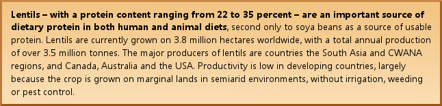 Lentils – with a protein content ranging from 22 to 35 percent – are an important source of dietary protein in both human and animal diets, second only to soya beans as a source of usable protein. Lentils are currently grown on 3.8 million hectares worldwide, with a total annual production of over 3.5 million tonnes. The major producers of lentils are countries the South Asia and CWANA regions, and Canada, Australia and the USA. Productivity is low in developing countries, largely because the crop is grown on marginal lands in semiarid environments, without irrigation, weeding or pest control.