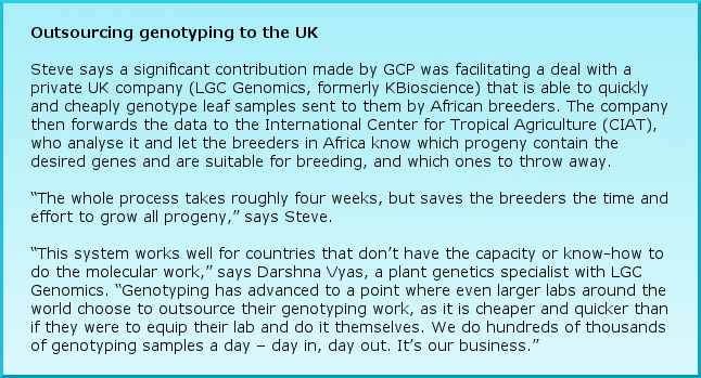 "Outsourcing genotyping to the UK Steve says a significant contribution made by GCP was facilitating a deal with a private UK company (LGC Genomics, formerly KBioscience) that is able to quickly and cheaply genotype leaf samples sent to them by African breeders. The company then forwards the data to the International Center for Tropical Agriculture (CIAT), who analyse it and let the breeders in Africa know which progeny contain the desired genes and are suitable for breeding, and which ones to throw away.  ""The whole process takes roughly four weeks, but saves the breeders the time and effort to grow all progeny,"" says Steve. ""This system works well for countries that don't have the capacity or know-how to do the molecular work,"" says Darshna Vyas, a plant genetics specialist with LGC Genomics. ""Genotyping has advanced to a point where even larger labs around the world choose to outsource their genotyping work, as it is cheaper and quicker than if they were to equip their lab and do it themselves. We do hundreds of thousands of genotyping samples a day – day in, day out. It's our business."""