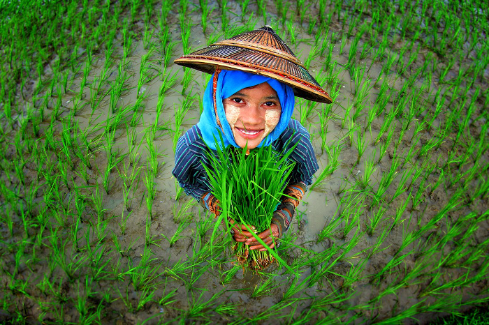 Photo: K Zaw/Bioversity International