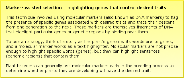 Marker-assisted selection – highlighting genes that control desired traits This technique involves using molecular markers (also known as DNA markers) to flag the presence of specific genes associated with desired traits and trace their descent from one generation to the next. These markers are themselves fragments of DNA that highlight particular genes or genetic regions by binding near them. To use an analogy, think of a story as the plant's genome: its words are its genes, and a molecular marker works as a text highlighter. Molecular markers are not precise enough to highlight specific words (genes), but they can highlight sentences (genomic regions) that contain them. Plant breeders can generally use molecular markers early in the breeding process to determine whether plants they are developing will have the desired trait.