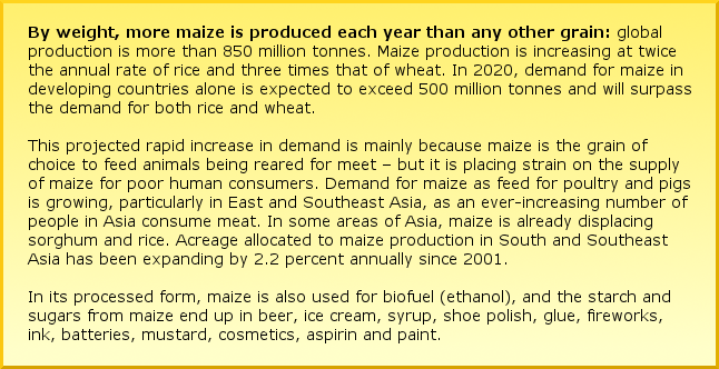 By weight, more maize is produced each year than any other grain: global production is more than 850 million tonnes. Maize production is increasing at twice the annual rate of rice and three times that of wheat. In 2020, demand for maize in developing countries alone is expected to exceed 500 million tonnes and will surpass the demand for both rice and wheat.  This projected rapid increase in demand is mainly because maize is the grain of choice to feed animals being reared for meet – but it is placing strain on the supply of maize for poor human consumers. Demand for maize as feed for poultry and pigs is growing, particularly in East and Southeast Asia, as an ever-increasing number of people in Asia consume meat. In some areas of Asia, maize is already displacing sorghum and rice. Acreage allocated to maize production in South and Southeast Asia has been expanding by 2.2 percent annually since 2001. In its processed form, maize is also used for biofuel (ethanol), and the starch and sugars from maize end up in beer, ice cream, syrup, shoe polish, glue, fireworks, ink, batteries, mustard, cosmetics, aspirin and paint.